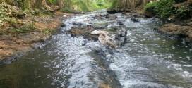 Asumió su cargo manifestando preocupación por contaminación del lago