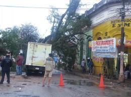 El árbol cayó sobre la cabina de la camioneta y puso en peligro el edificio  del frente.